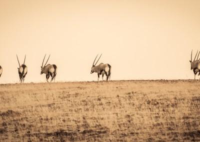 Orici, Namibia