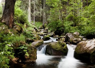 Val di Fassa, fiume nel bosco