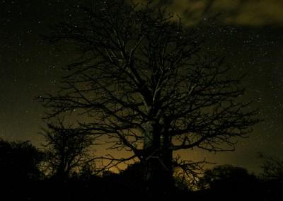 Andrea Mazzella, albero notturno, Mozambico