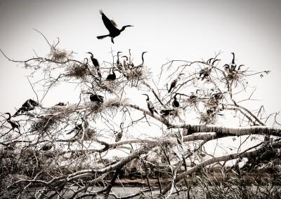 Birding area, Namibia