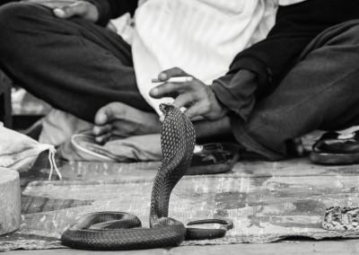 cobra nella Djemaa el-Fnaa, Marocco