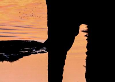 Elefante alla pozza, Namibia