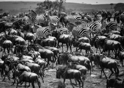 Grande migrazione, Kenya