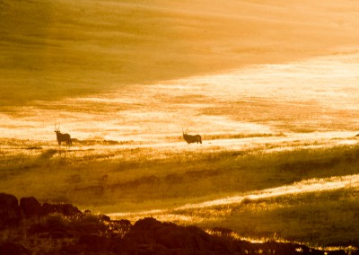 Orici al tramonto, Namibia