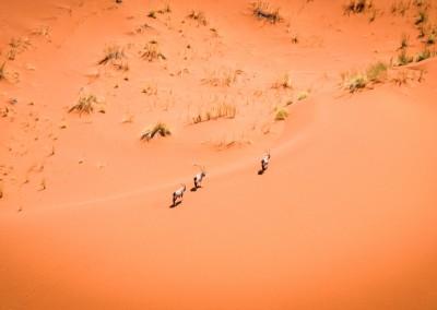 Orici sulle dune del Namib, Namibia