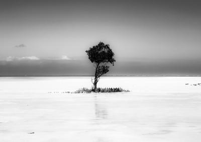 Andrea Mazzella, silent tree, Mozambico