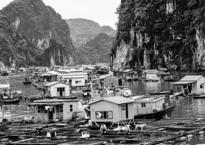 villaggi galleggianti, coltivatori di perle, Halong bay, Vietnam