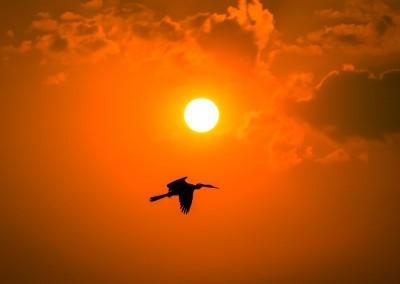 Volo al tramnoto, Chobe, Botswana